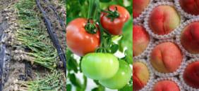 水稲・畑作・果樹園・茶園・ハウス栽培・園芸・家庭菜園・ゴルフ場芝・基盤整備した圃場・その他