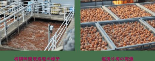 梅調味廃液処理の様子 塩漬け梅の乾燥